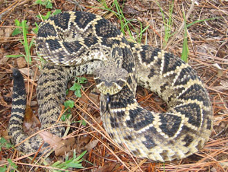 Fairfax County Snake Removal Snake Control Trapping In